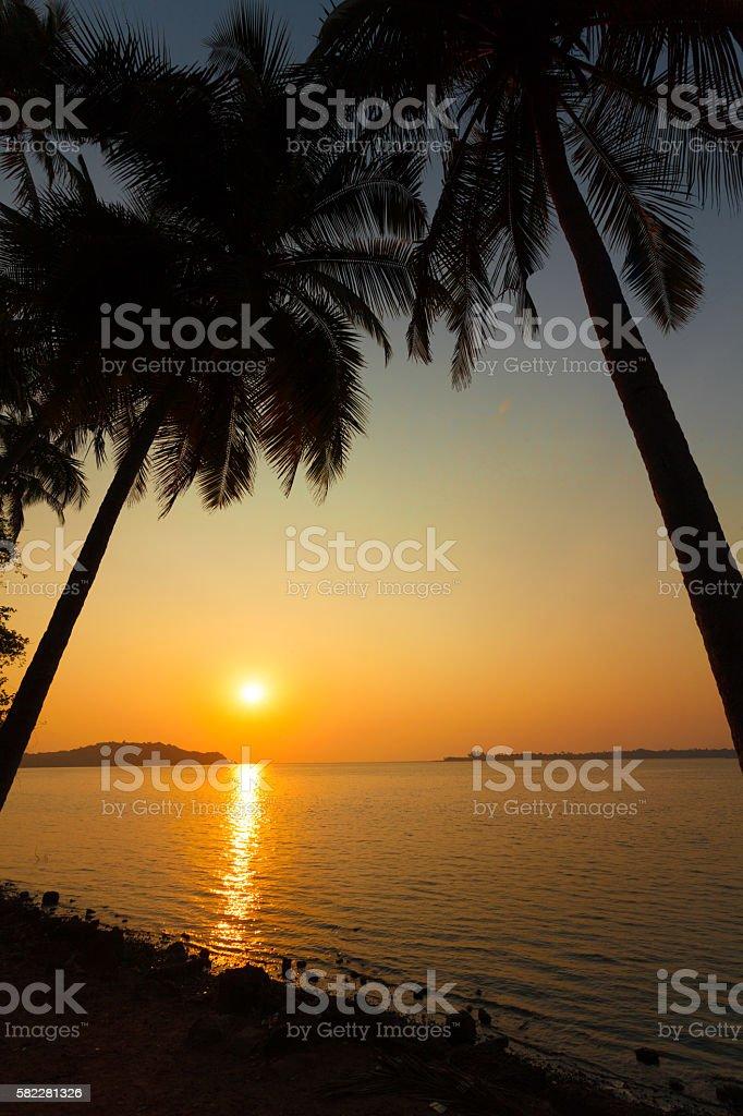 palm trees goa stock photo