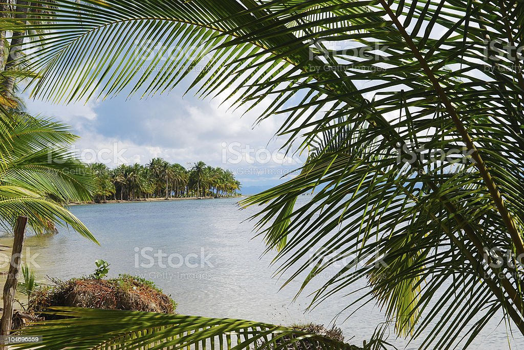 Beach framed by palm trees in Bocas del Toro, Panama royalty-free stock photo