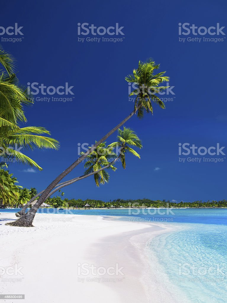 Palm trees hanging over lagoon with blue sky stock photo