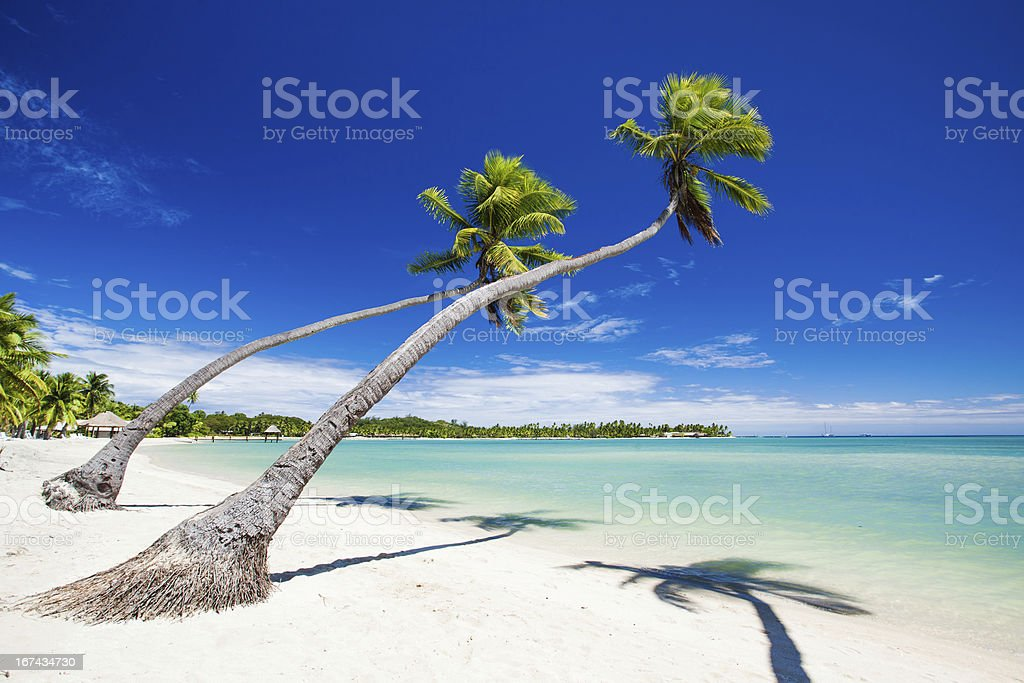 Palm trees hanging over stunning tropical lagoon stock photo