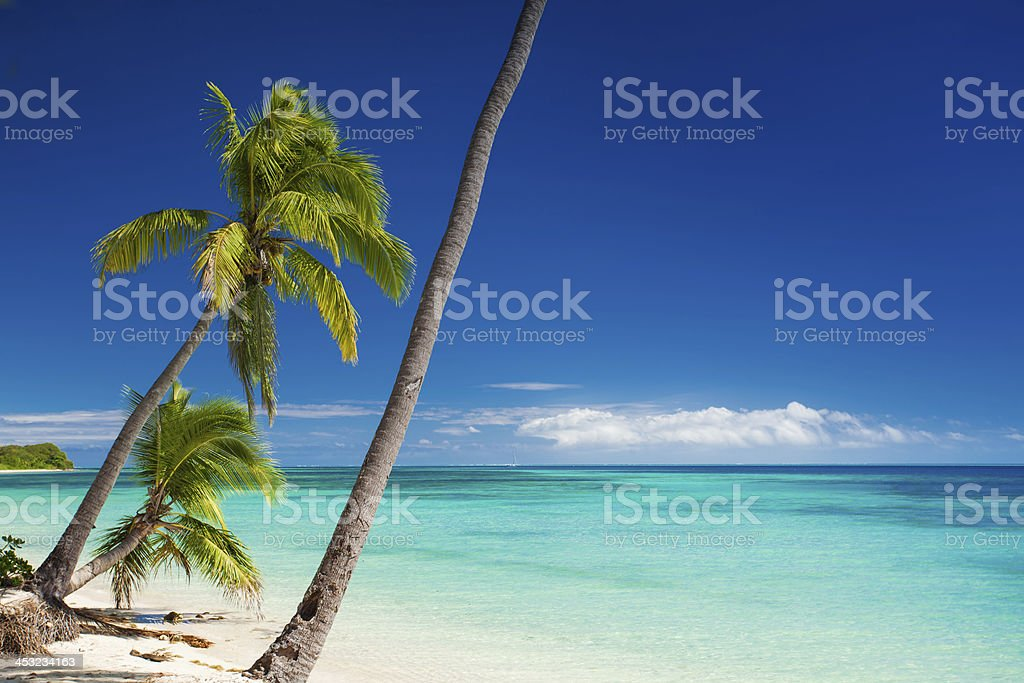 Palm trees hanging over tropical beach stock photo