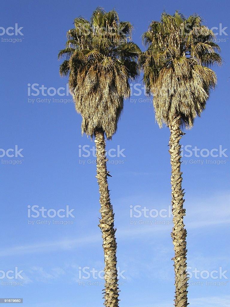 Palm Trees, Hollywood, California, USA. royalty-free stock photo