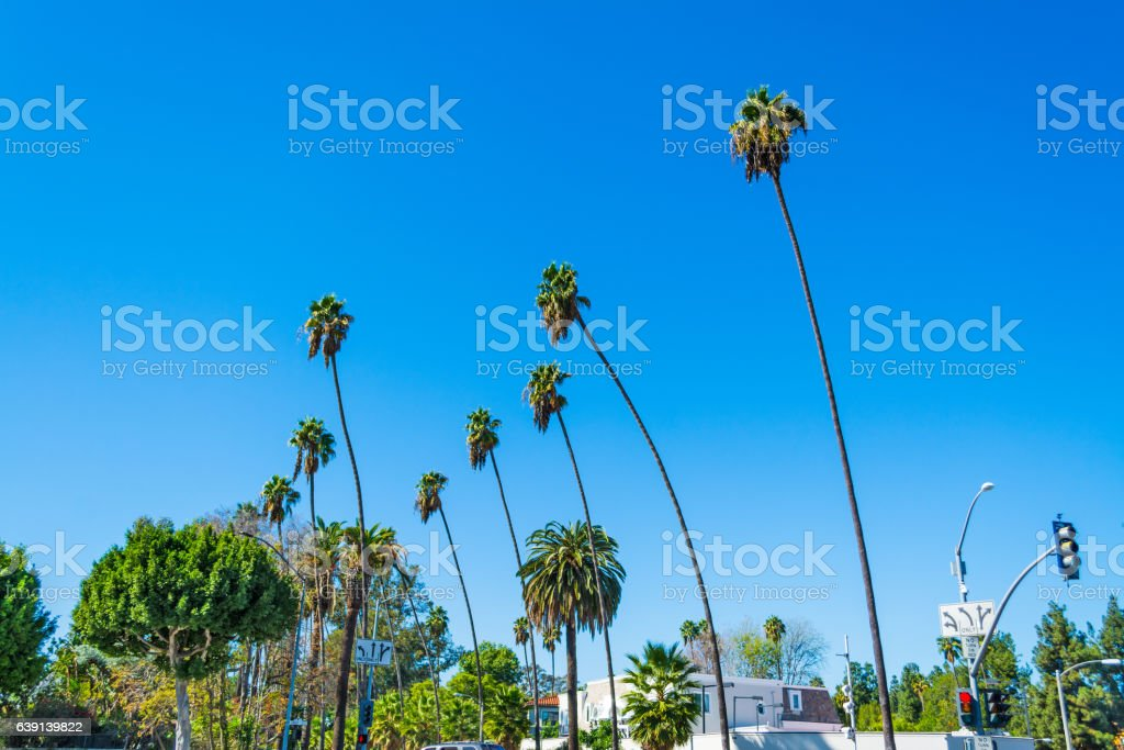 Palm trees in Beverly Hills stock photo
