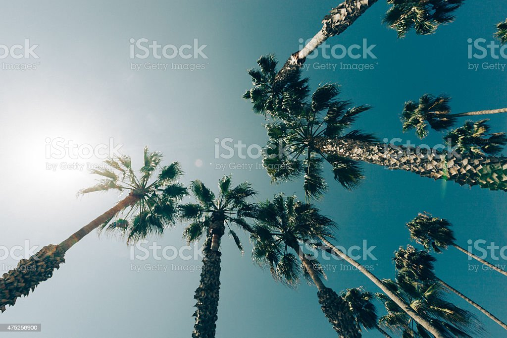 Palm Trees in California stock photo
