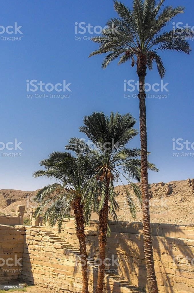 Palm trees in Cleopatra's pool over blue sky stock photo