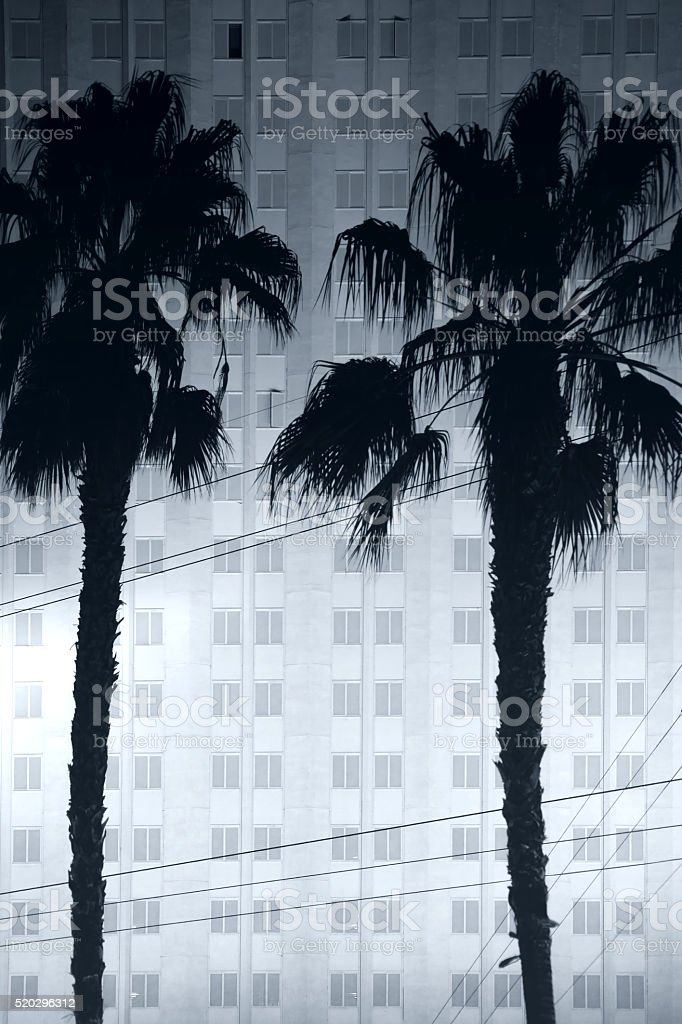 Palm trees in front of the Hotel stock photo