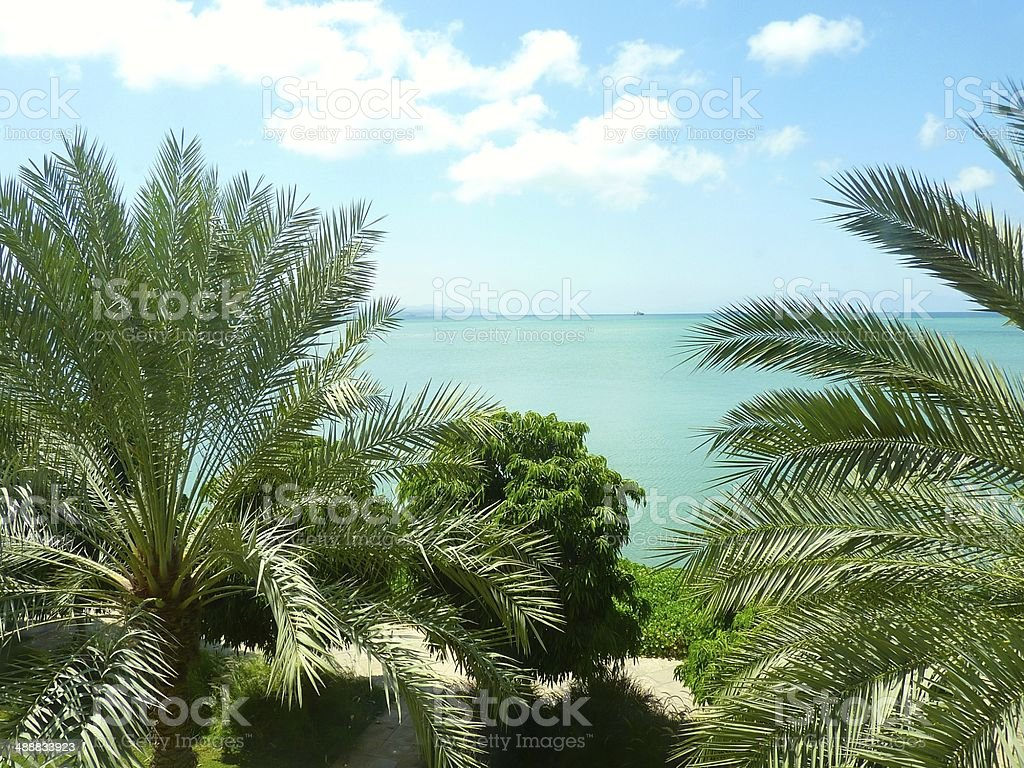 Palm trees in front of the sea in Djibouti royalty-free stock photo