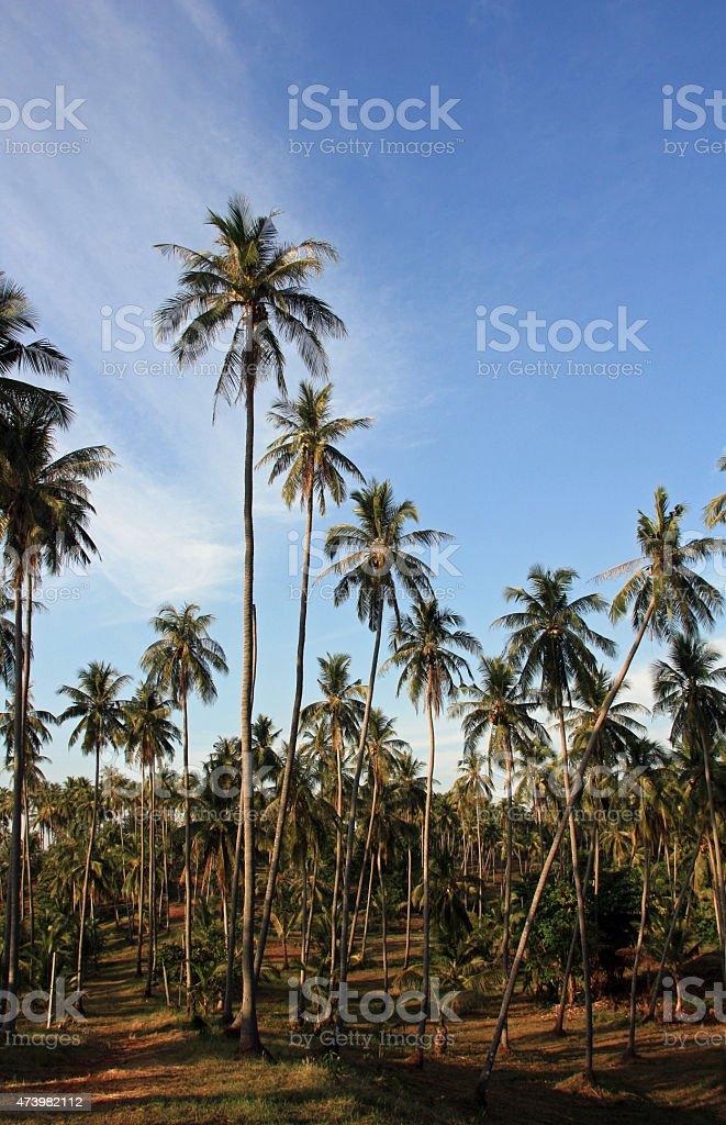 Palma árvores da selva foto de stock royalty-free