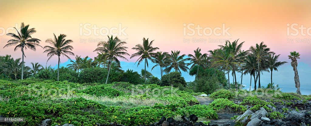 Palm Trees in Kapalua stock photo