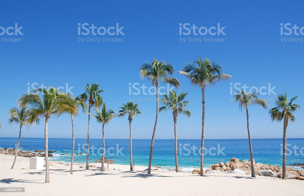 Palm Trees in Los Cabos stock photo