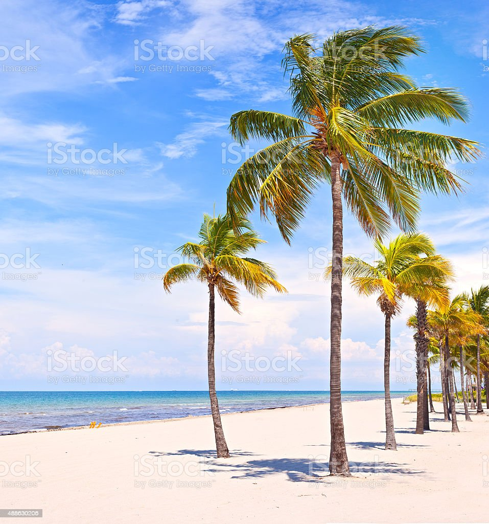 Palm trees in Miami Beach stock photo