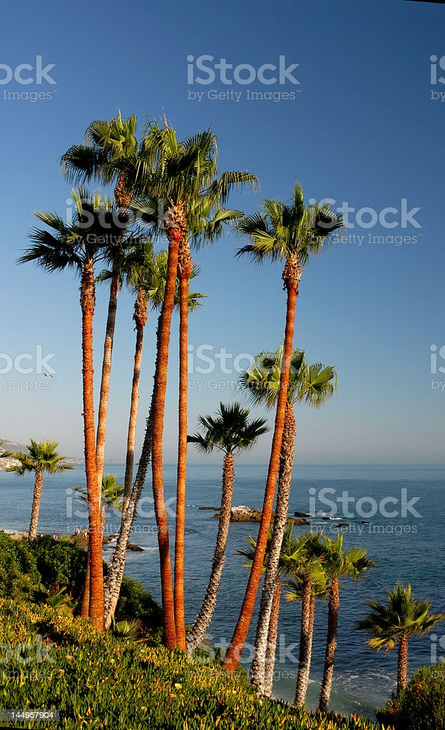 Palm Trees in Orange County stock photo