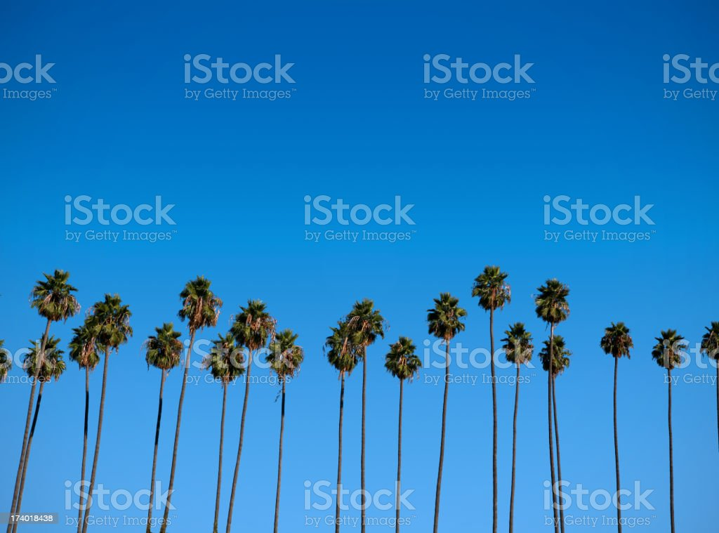 Palm Trees in Paradise royalty-free stock photo