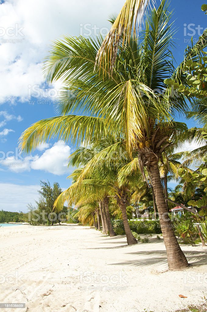 Palm Trees In Paradise stock photo