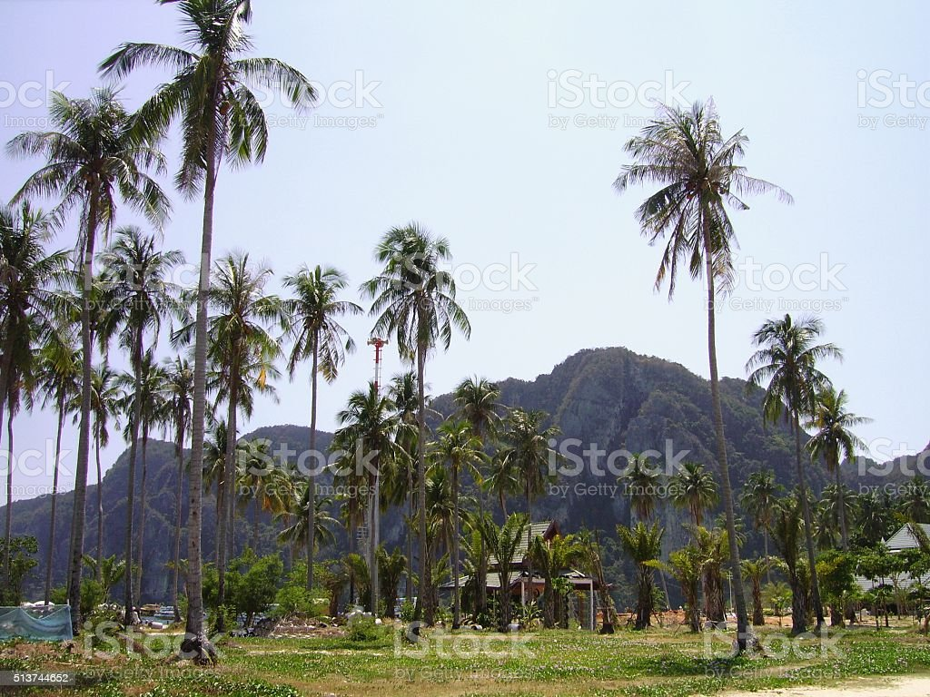 Palm trees in PhiPhi island, Thailand stock photo