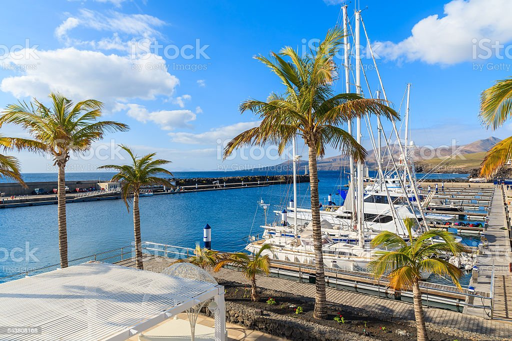 Palm trees in Puerto Calero marina stock photo