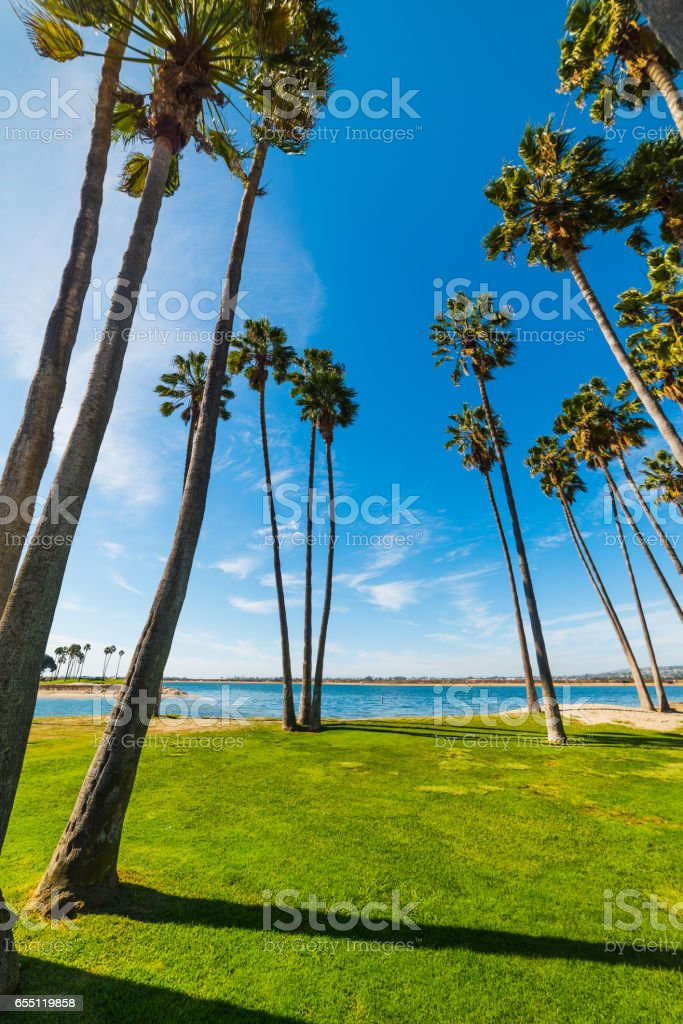 Palm trees in San Diego stock photo