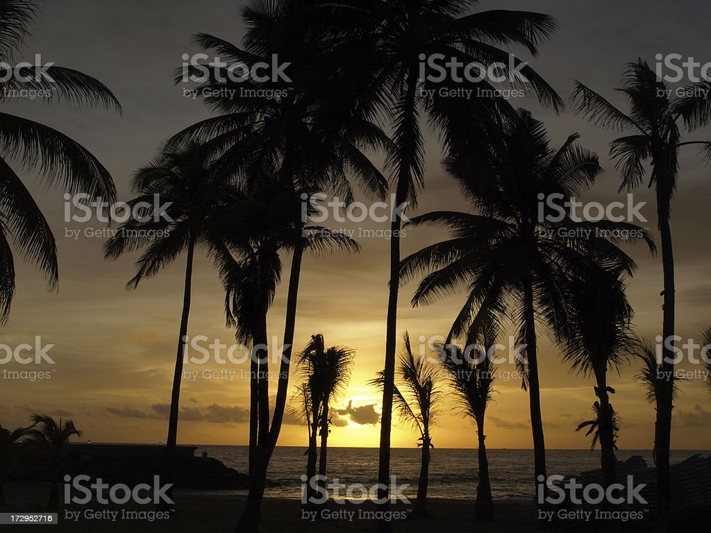 Palm trees in silhouette stock photo