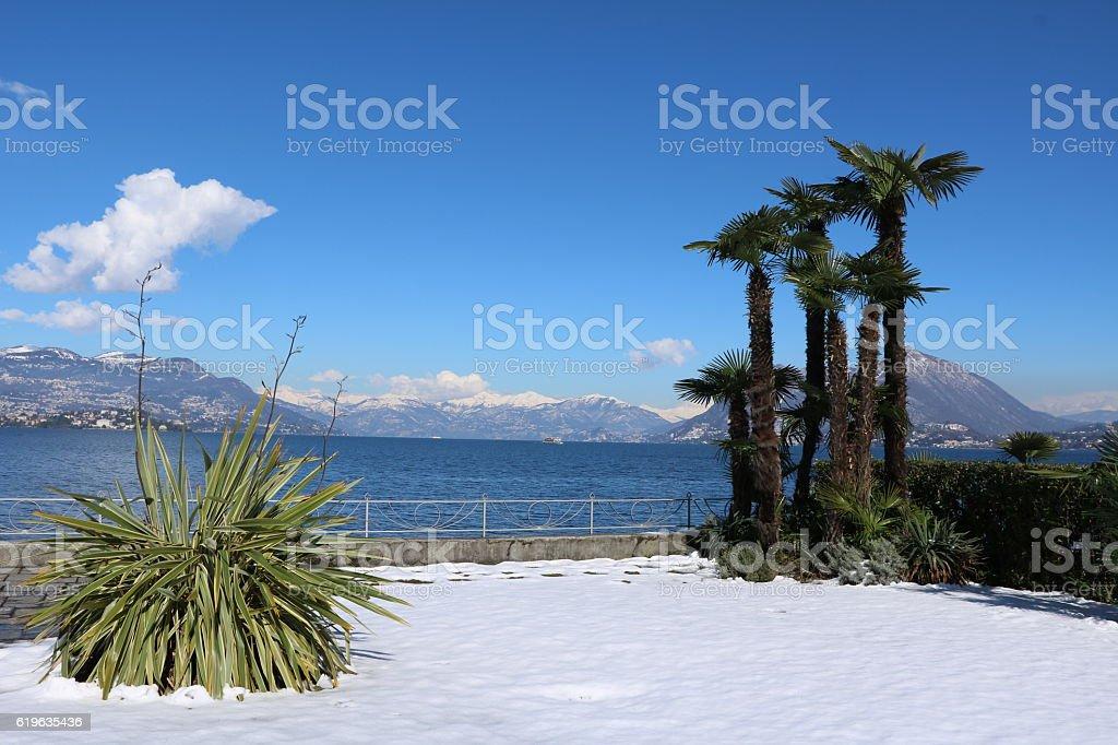 Palm trees in snow, winter in Stresa, Lake Maggiore Italy stock photo