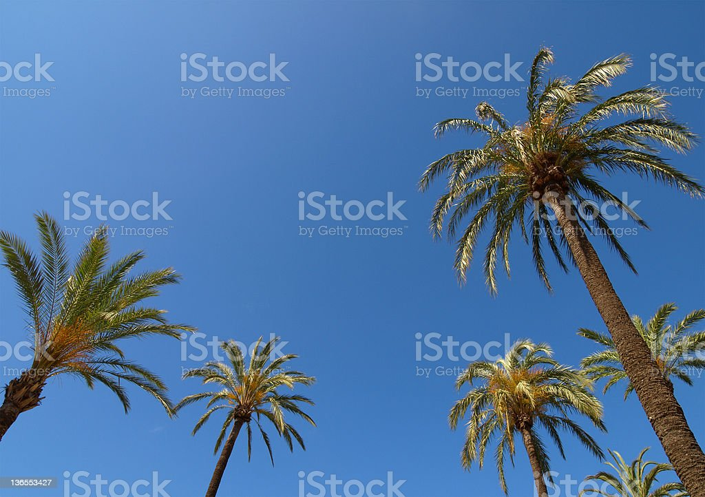 Palm Trees in Spain Against A Clear Blue Sky royalty-free stock photo