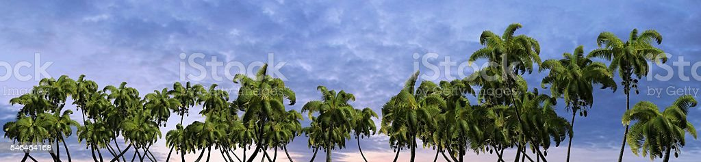Palm trees in sunset at a tropical beach  panorama stock photo