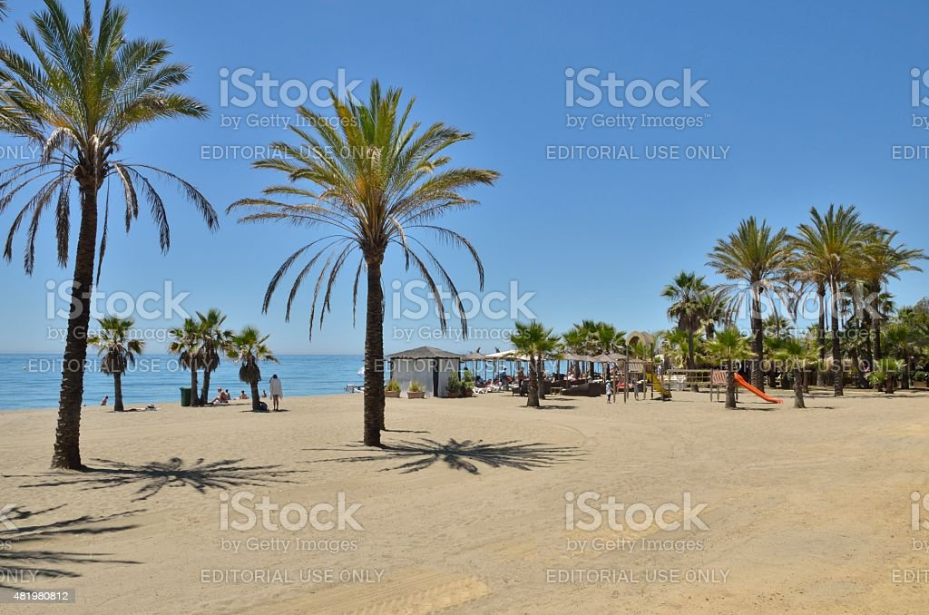Palm trees in the beach stock photo
