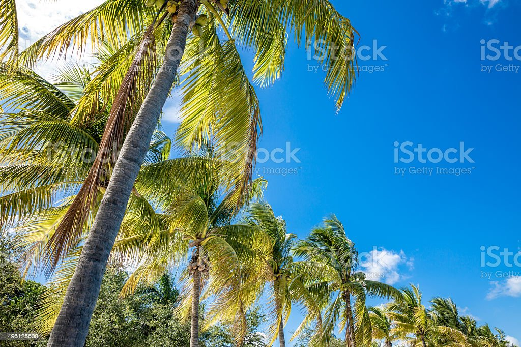 Palm trees in the blue sunny sky stock photo