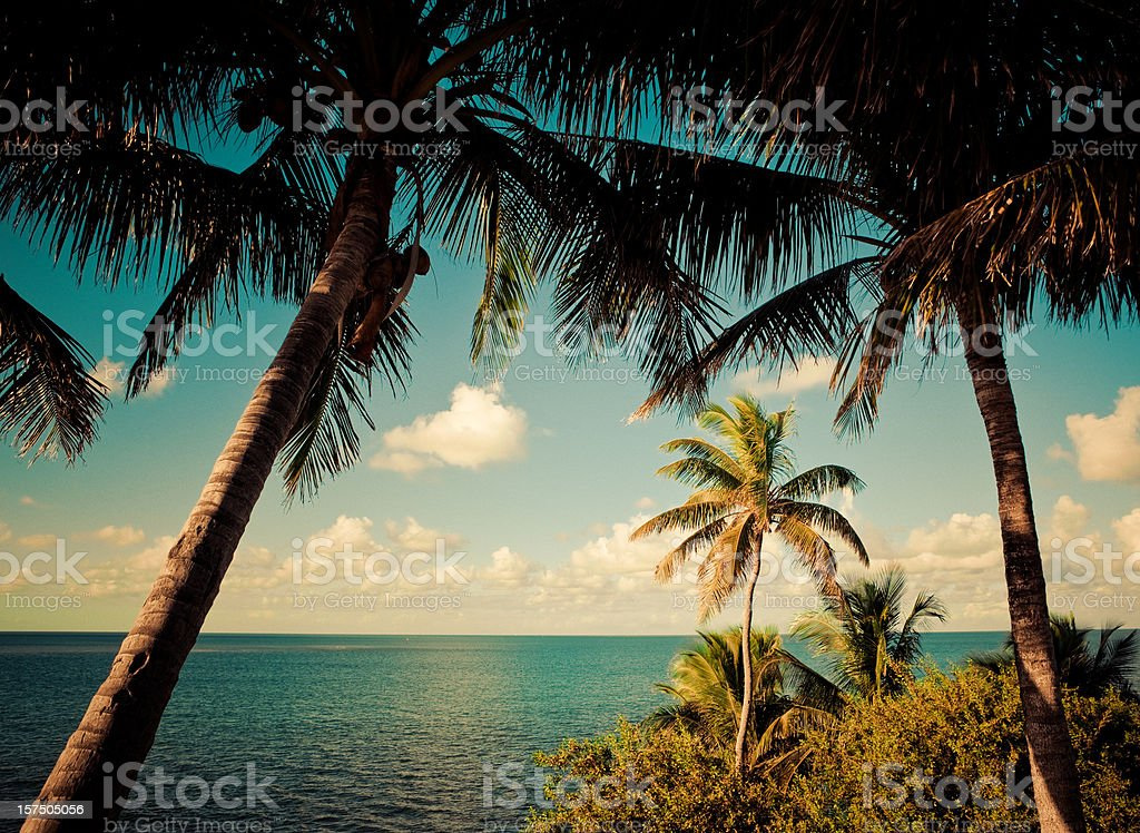 palm trees in the florida keys royalty-free stock photo