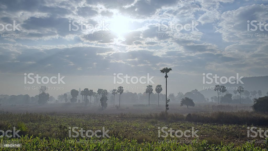 Palm trees in the fog stock photo