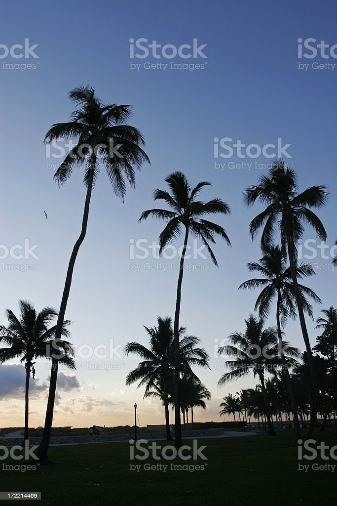 Palm Trees in the Sunrise royalty-free stock photo