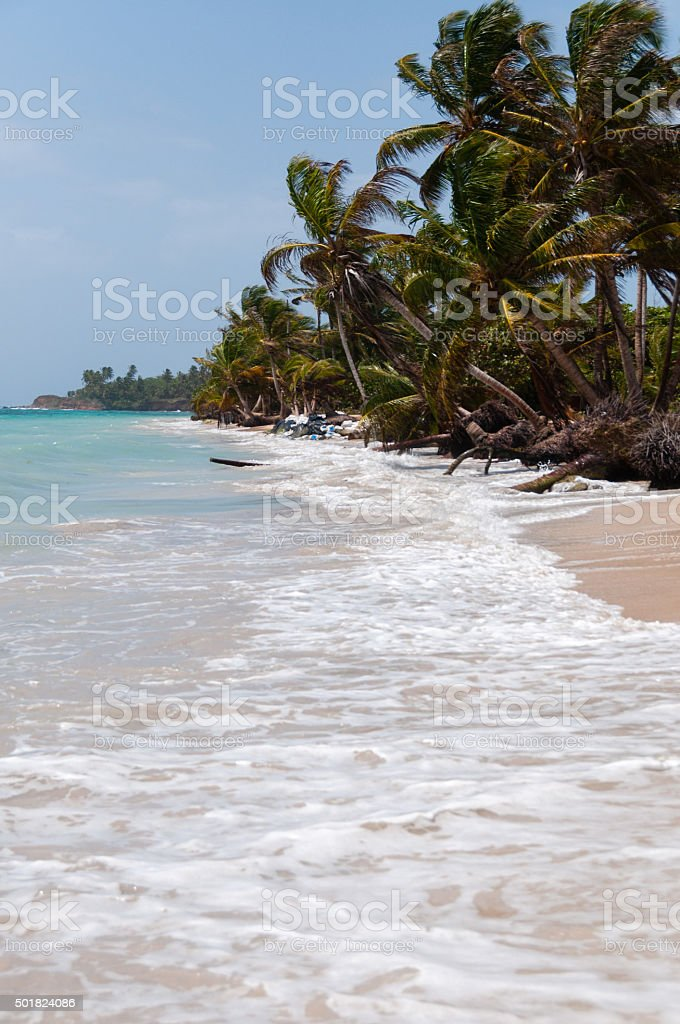 Palm Trees in the wind on white sand beach coast stock photo