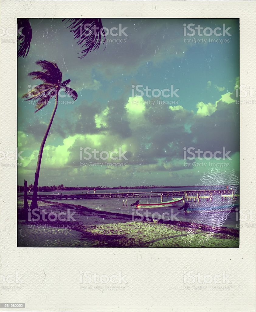 Palm trees in the wind stock photo