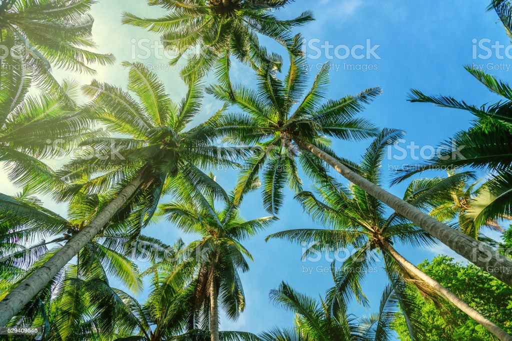Palm trees in tropical forest stock photo