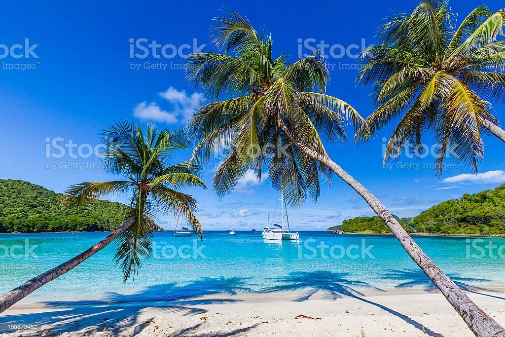 Palm trees line sandy coastline of Salt Whistle Bay, Mayreau stock photo