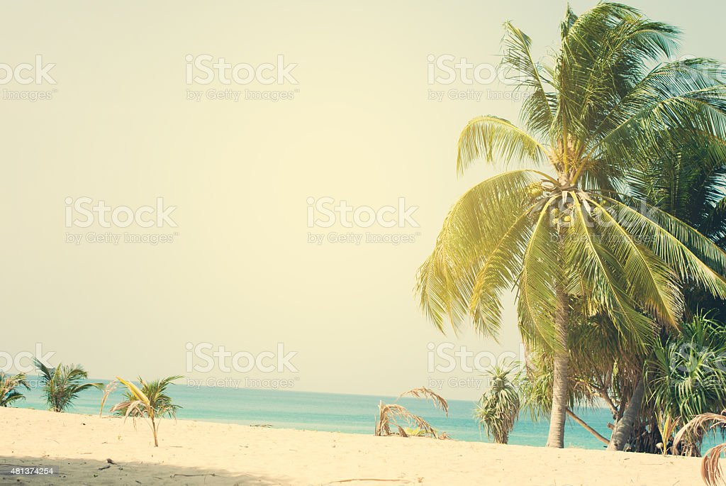 Palm Trees lit by the Sun on Tropical Coast stock photo