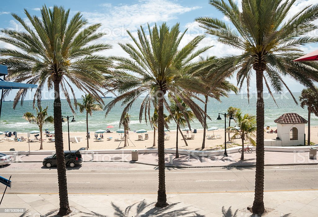 Palm Trees Near The Beach In Fort Lauderdale stock photo