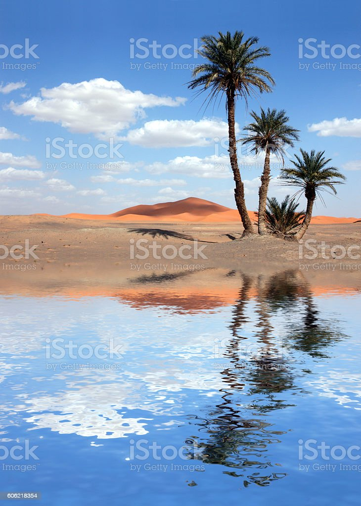 Palm Trees near the Lake in the Sahara Desert stock photo