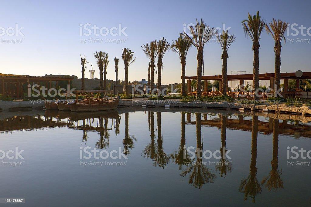 Palm  Trees near the pool royalty-free stock photo