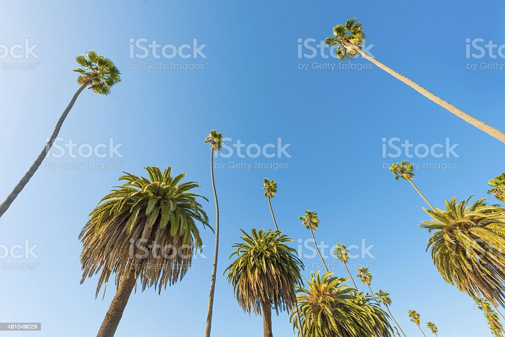 Palm Trees of paradise, clear blue sky. stock photo