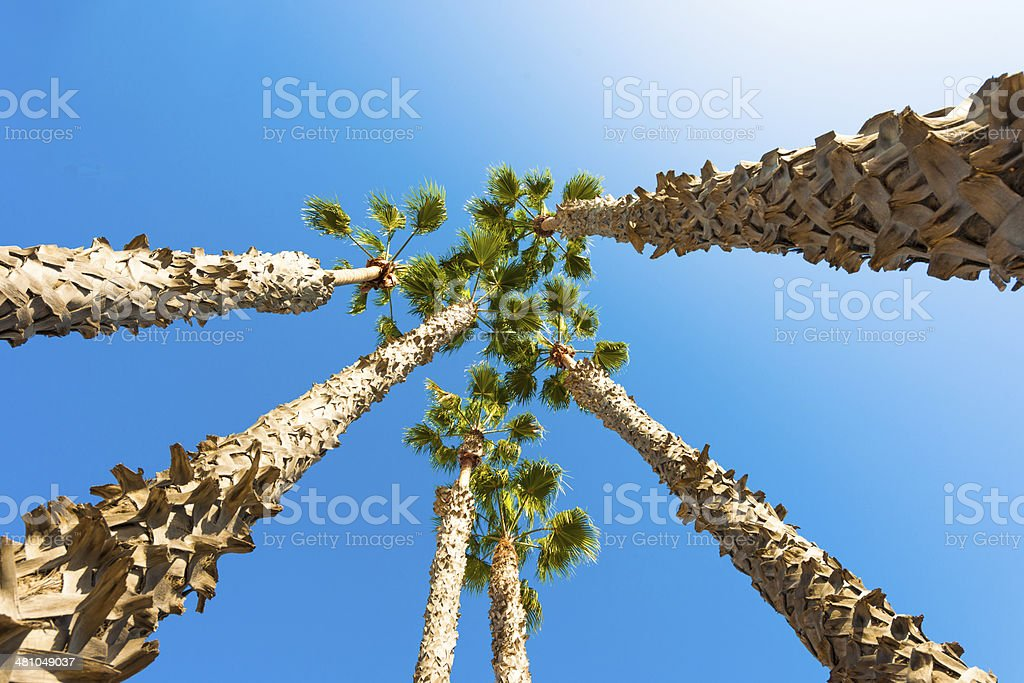 Palm Trees of paradise, clear blue sky stock photo