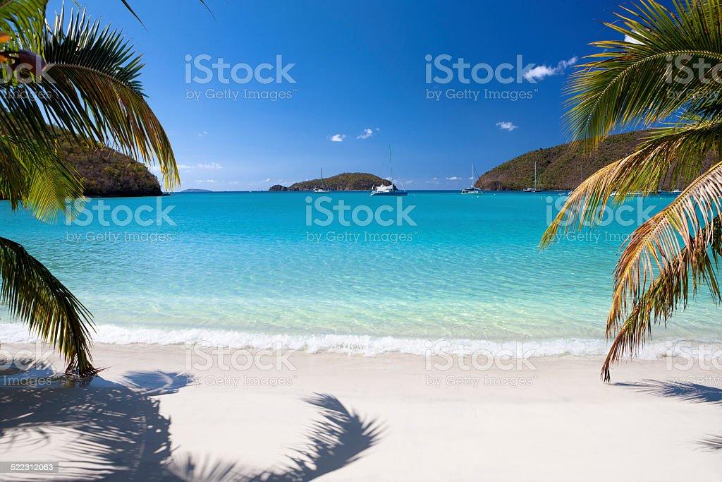 palm trees on a beach at Maho Bay, St.John, USVI stock photo