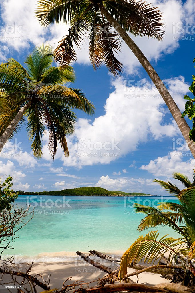 palm trees on a beach in the Virgin Islands stock photo