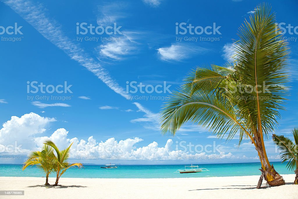 Palm trees on a tropical beach stock photo