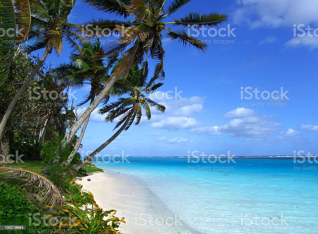 Palm trees on a tropical island royalty-free stock photo