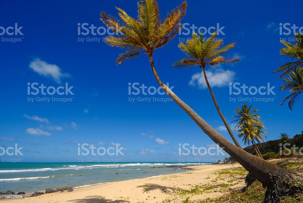 Palm trees on a tropical island with bright blue skies stock photo