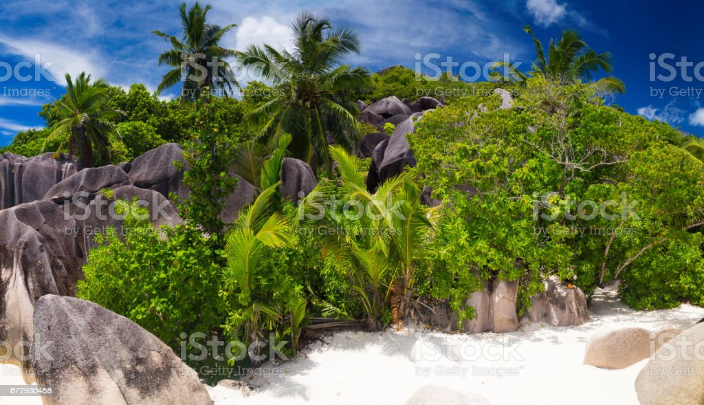 Palm trees on Anse Source d'Argent, Seychelles stock photo