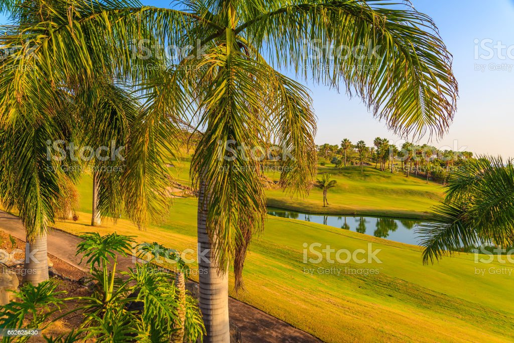 Palm trees on golf course at sunset time, Tenerife, Canary Islands, Spain stock photo