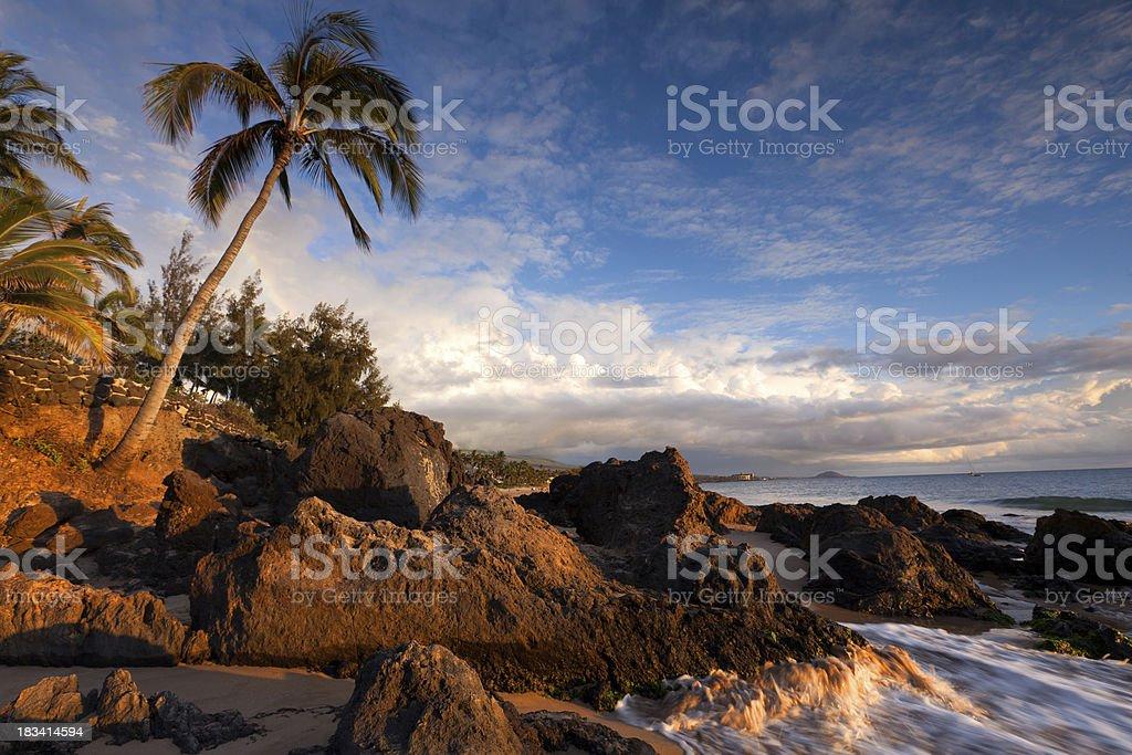 palm trees on plain meadow, maui, hawaii stock photo
