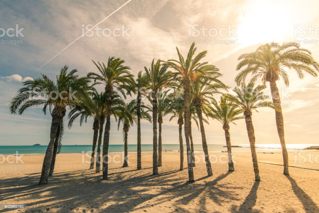 Palm trees on sandy beach with sunlight stock photo
