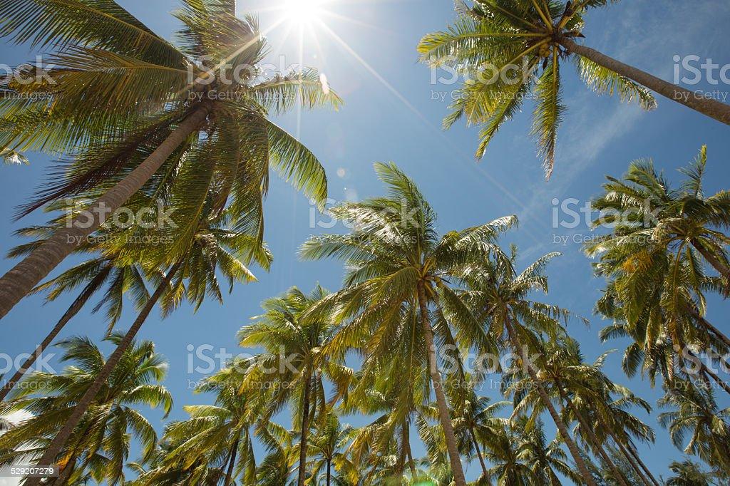 Palmen auf der sonnigen tropischen Insel Tag Lizenzfreies stock-foto